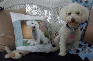Custom made photo pillow, with client's doggie. By Martha Ressler
